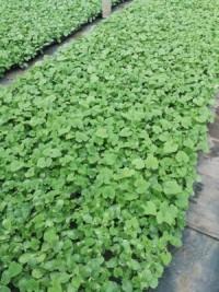 园艺栽培基质