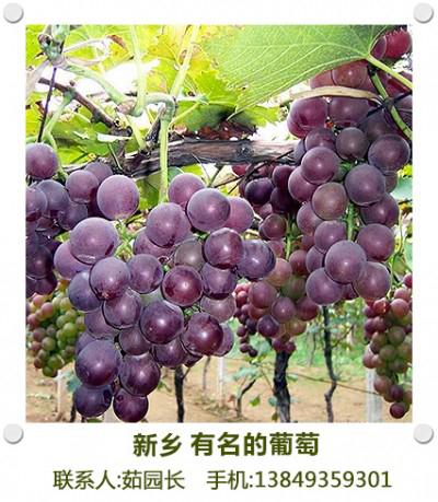南张门葡萄
