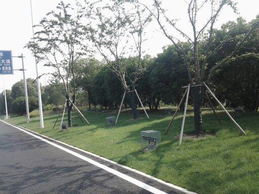 树木防寒布