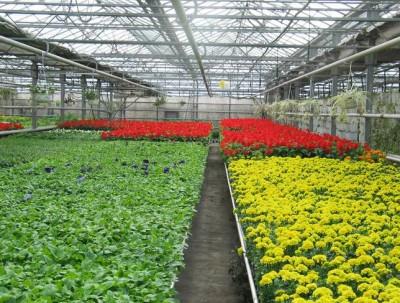 花卉大棚室內