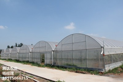 连栋拱型温室
