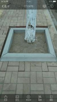 树坑石批发