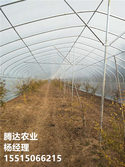 12米蔬菜拱棚