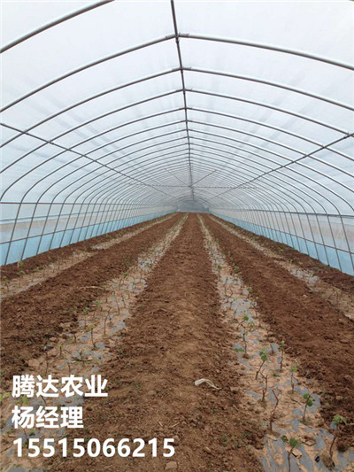 20米蔬菜拱棚