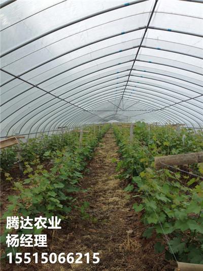 冬暖蔬菜大拱棚