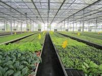 蔬菜大棚造价表