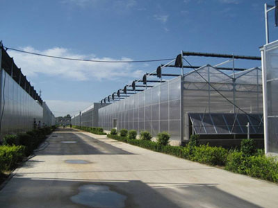 大棚蔬菜种植