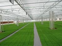 温室蔬菜生长