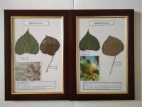 高質量植物病害原色标本