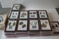 植物病害标本