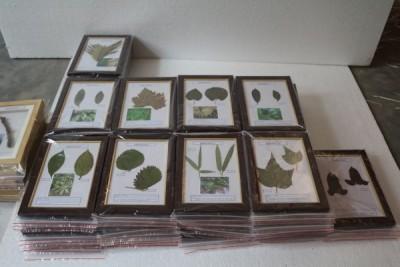 植物病害原色标本教学标本