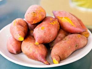 红薯种批发