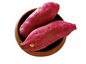 粉条红薯种