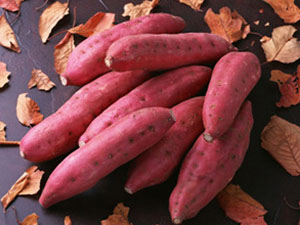 高淀粉红薯苗