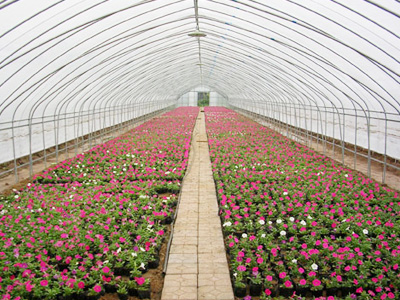 新型花卉大棚