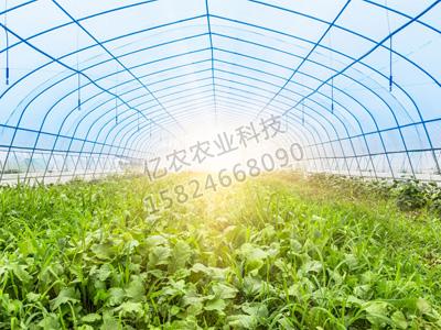 蔬菜亚虎国际老虎机APP