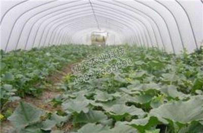 蔬菜钢架大棚