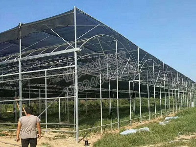 玻璃连栋温室亚虎国际老虎机APP