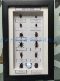 昆虫标本六害六益