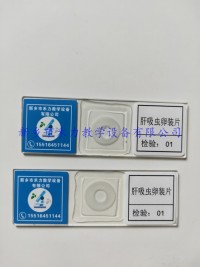 寄生虫玻片标本   肝吸虫卵装片
