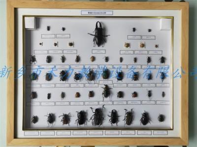 昆虫标本分类