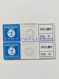 肺吸蟲囊蚴切片标本  寄生蟲學玻片标本