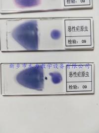 惡性瘧原蟲  間日瘧原蟲  三日瘧原蟲  人體寄生蟲病标本