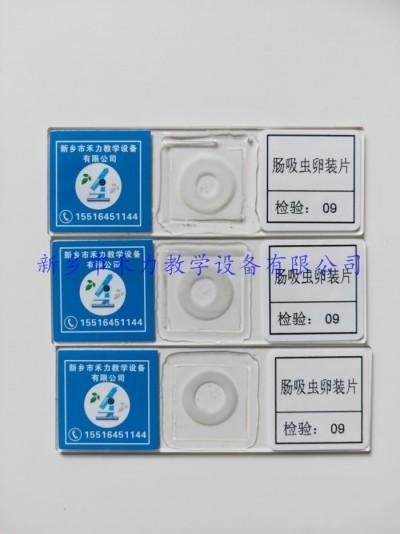 肠吸虫卵装片 寄生虫玻片标本  寄生虫卵装片