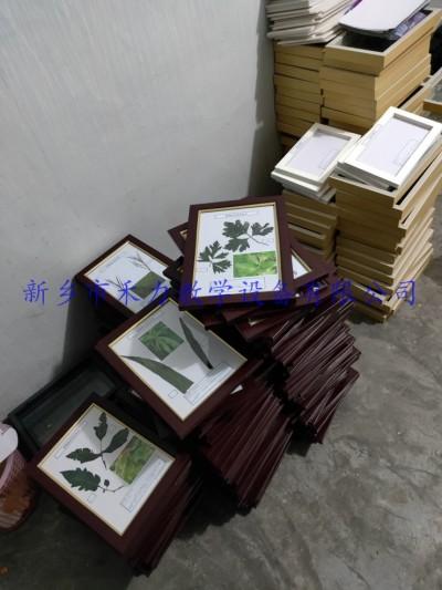 植物病害原色标本教学展示标本