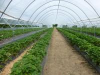冬季蔬菜大棚的防寒措施