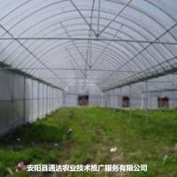 蔬菜大棚建设成本