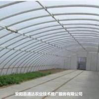 日光温室大棚建设