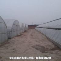 养殖塑料大棚