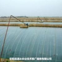 农业塑料大棚