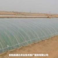 温室塑料大棚