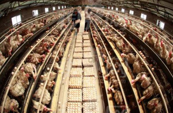 智能畜牧養殖監控系統