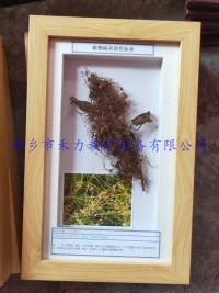 大豆病害大豆菟丝子盒装展示标本