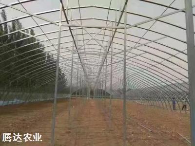 大跨度拱形温室