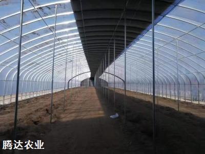 連棟拱型溫室