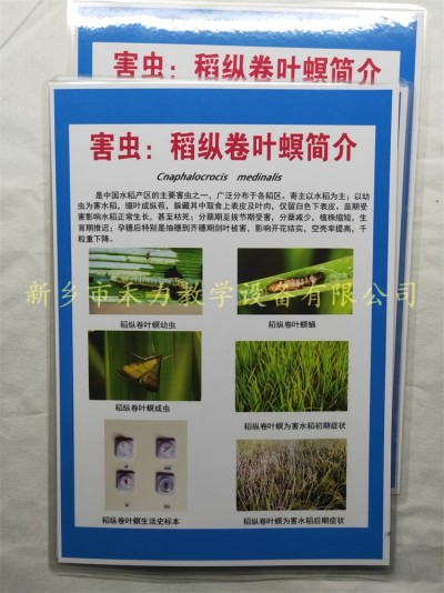 水稻害虫标本稻纵卷叶螟教学挂图展示