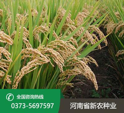新农稻1号