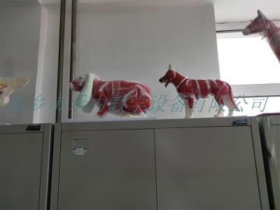 兔解剖模型实验解剖模型