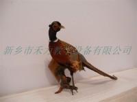 鸟类剥制标本兽类剥制皮毛标本