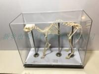 羊骨骼标本教学骨骼标本
