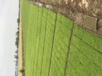 水稻育苗成品