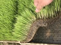 有机水稻育秧基质