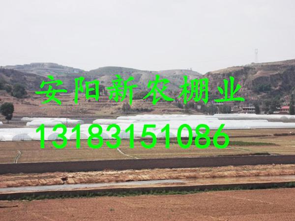 山东青岛大棚工程