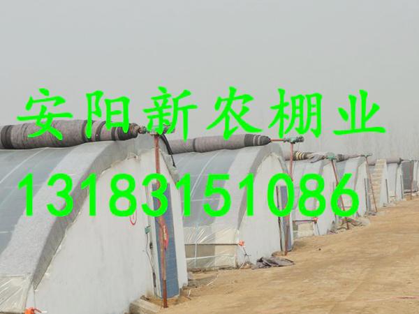 河南汤阴大棚工程
