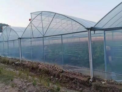 鋸齒型連棟溫室
