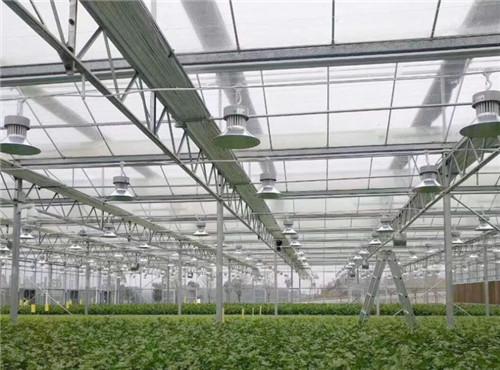 溫室蔬菜大棚